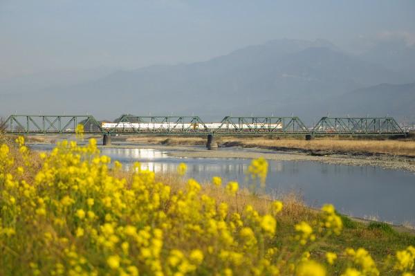 菜の花が咲く頃 橋梁を渡る電車
