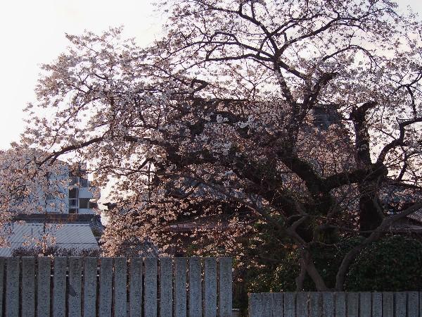 愛媛県西条市小松町 宝寿寺 春のお参り
