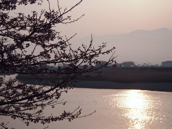 西条市 新兵衛橋 土手沿いの夕景