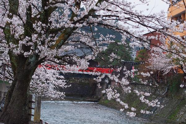 岐阜県高山市  赤橋