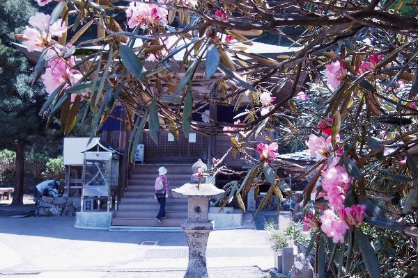 第60番札所 石鈇山 福智院 横峰寺