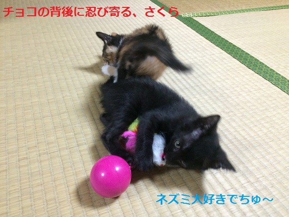 060100201166.jpg