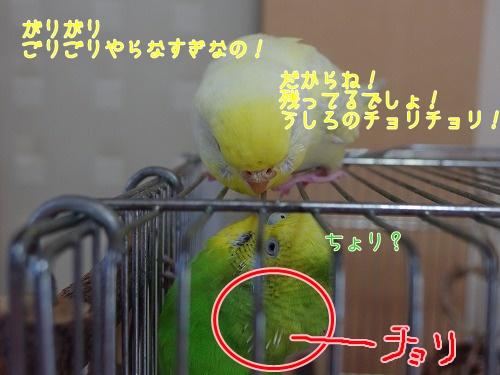 s-IMGP0501.jpg