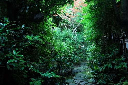 緑わっさーのお庭