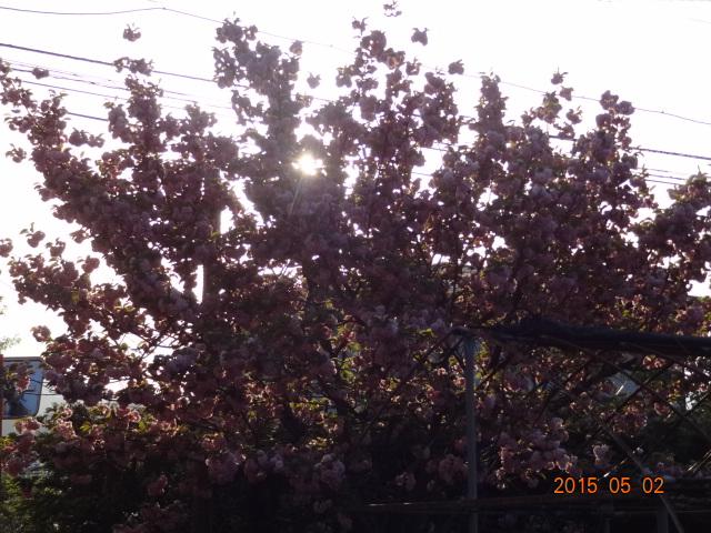 DSC07961_201505030011357d3.jpg