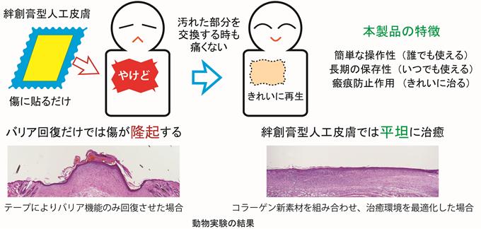 人工皮膚概念
