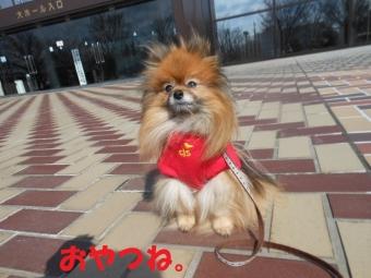 きょうのお散歩0227 (2)