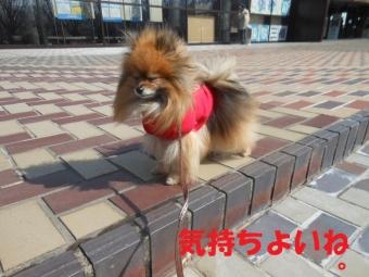 きょうのお散歩0227 (3)