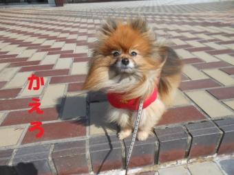 きょうのお散歩0227 (4)