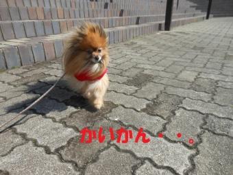 きょうのお散歩0227 (7)
