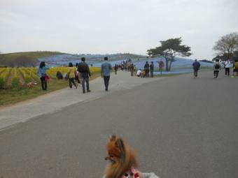 ひたち海浜公園 034