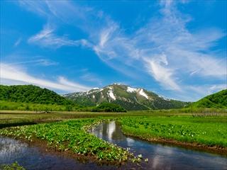 2015-6-10 尾瀬ヶ原55 (1 - 1DSC_0092)_R