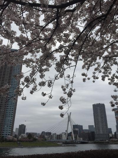 2015桜@越中島