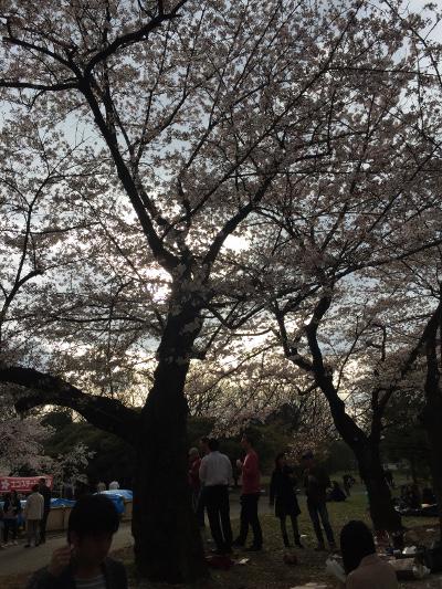2015桜@代々木公園