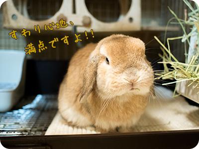 cookieblo1502104.jpg
