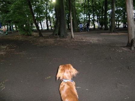 遠くの公園