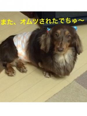 IMG_3876.jpg