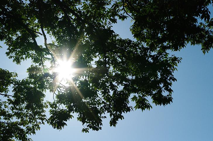 太陽(中)