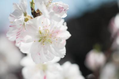 2015_03_28_hanamomo_MG_1050.png