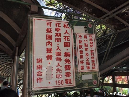 陽明山竹子湖海芋6