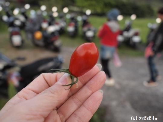 陽明山竹子湖海芋25