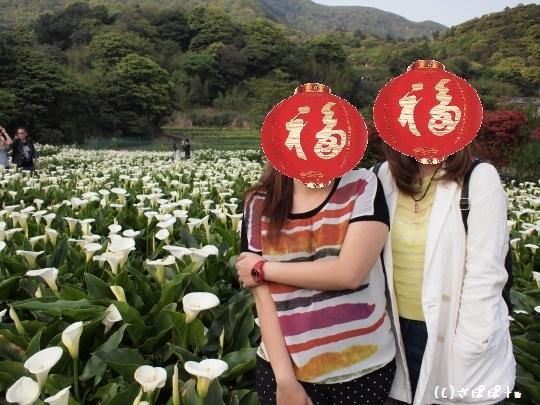 陽明山竹子湖海芋16-1