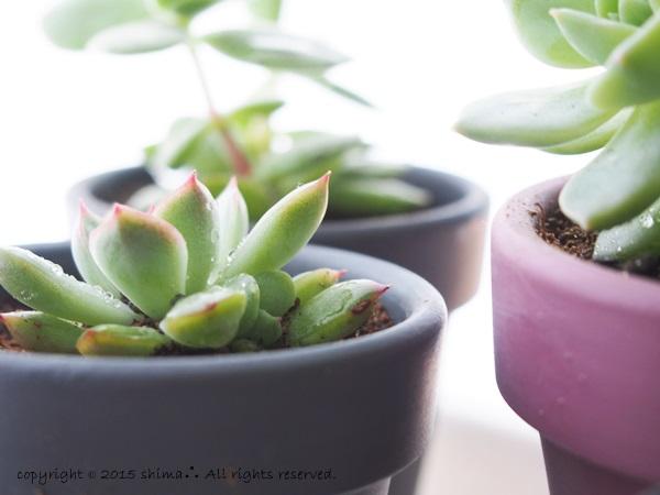 20150520多肉植物4
