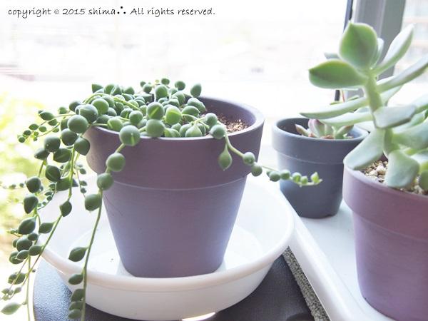 20150520多肉植物9