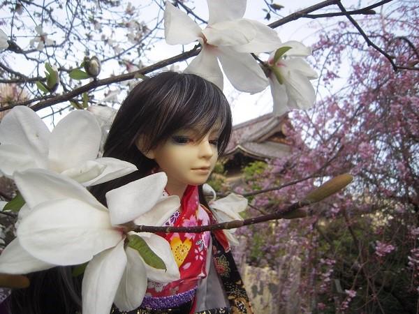 130321椿 桜1