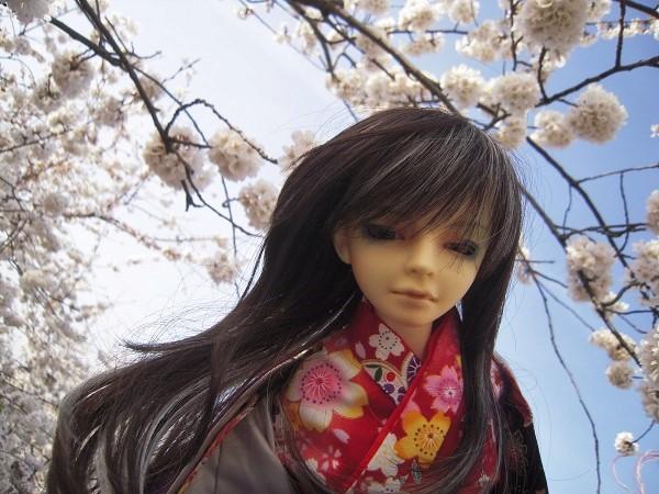 130321椿 桜2 (2)