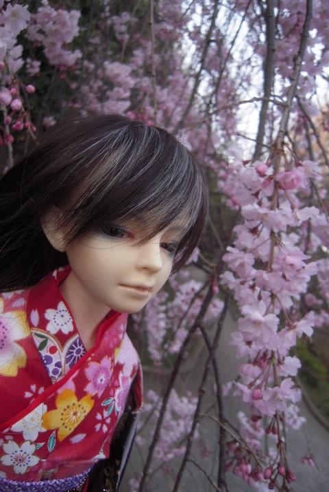 130321椿 桜3