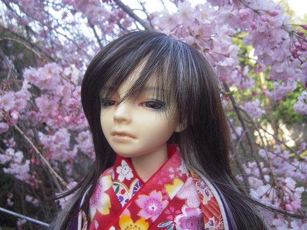 130321椿 桜4