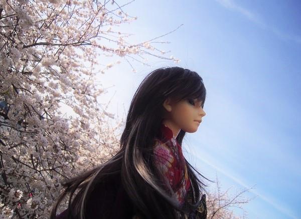 130321椿 桜5 (2)