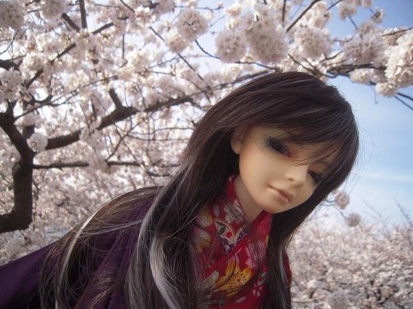130321椿 桜6