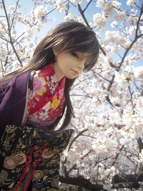 130321椿 桜7