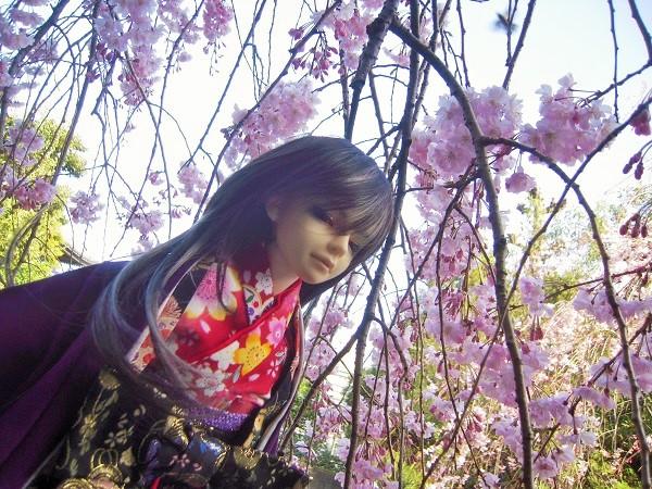 130321椿 桜8 (2)