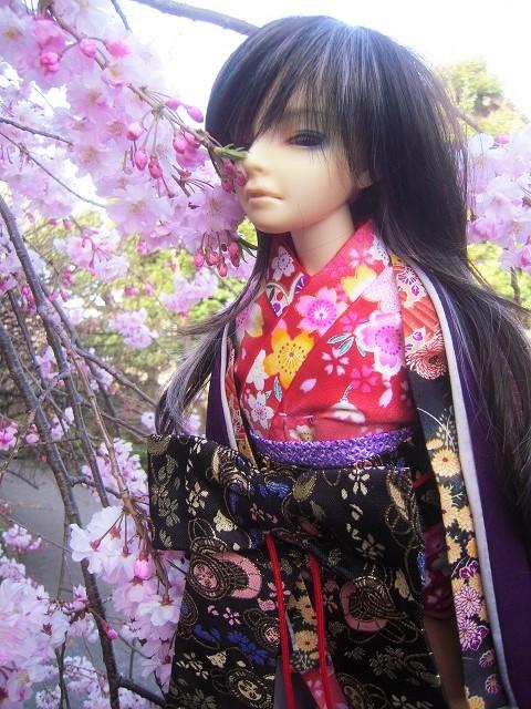 130321椿 桜10