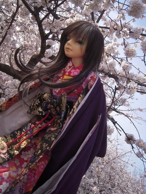 130321椿 桜11 (2)
