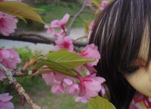 130321椿 桜13