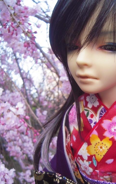130321椿 桜14