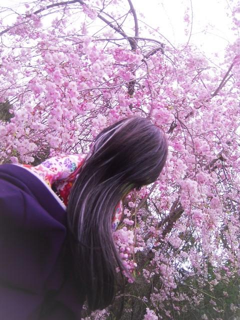 130324椿 桜1