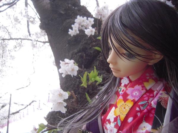 130324椿 桜2