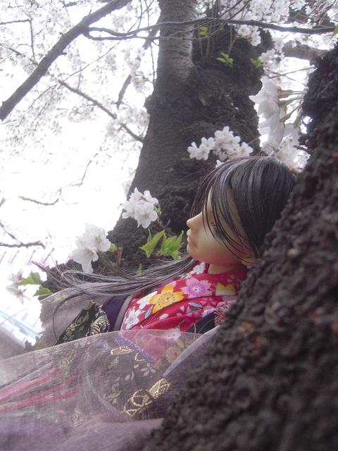 130324椿 桜3