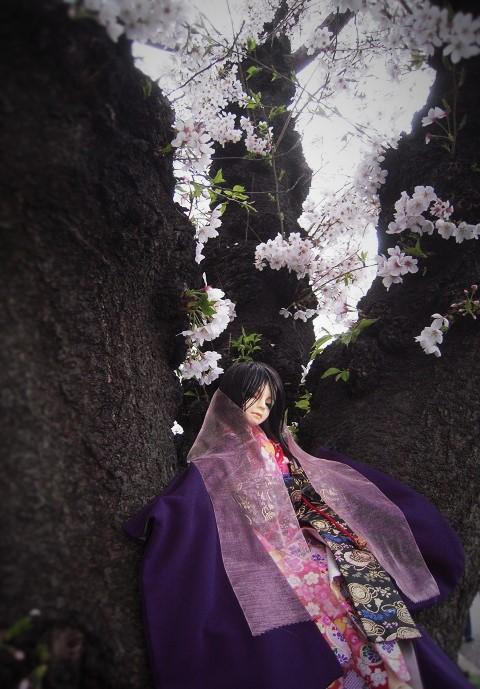 130324椿 桜4 (2)