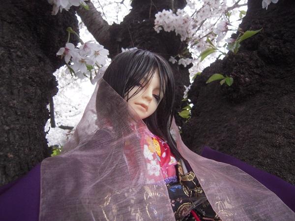 130324椿 桜5