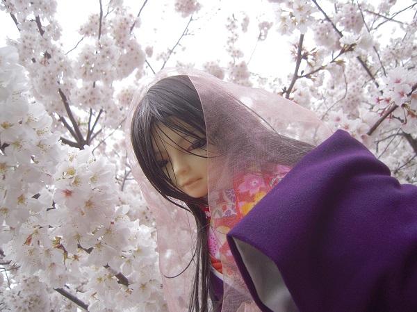 130324椿 桜7