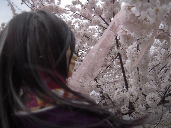 130324椿 桜12