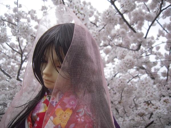 130324椿 桜13