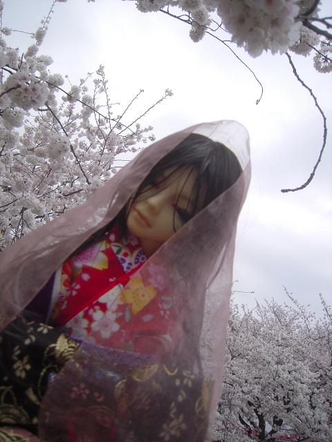 130324椿 桜15
