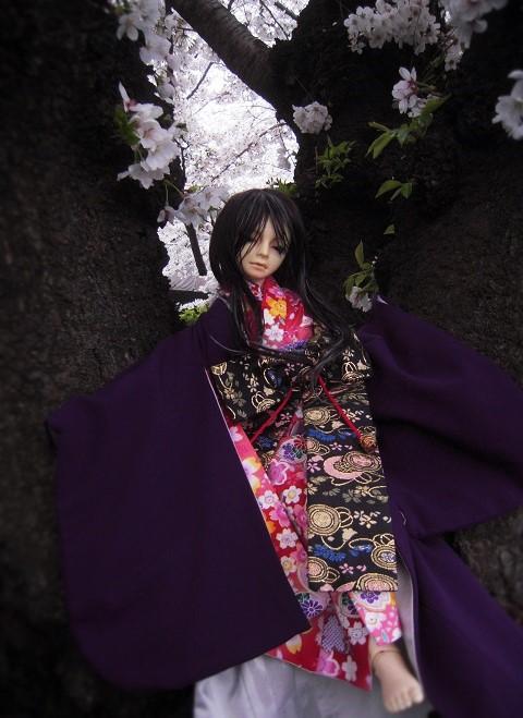 130324椿 桜16
